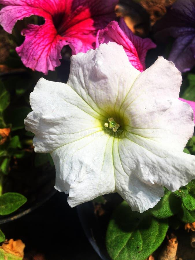 Fleurs dans de belles couleurs sous le soleil photographie stock libre de droits