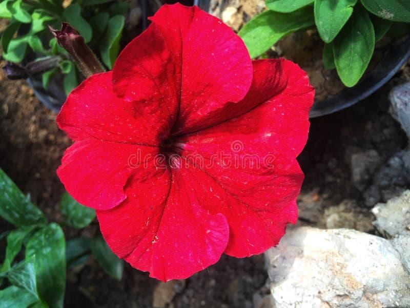 Fleurs dans de belles couleurs sous le soleil photographie stock