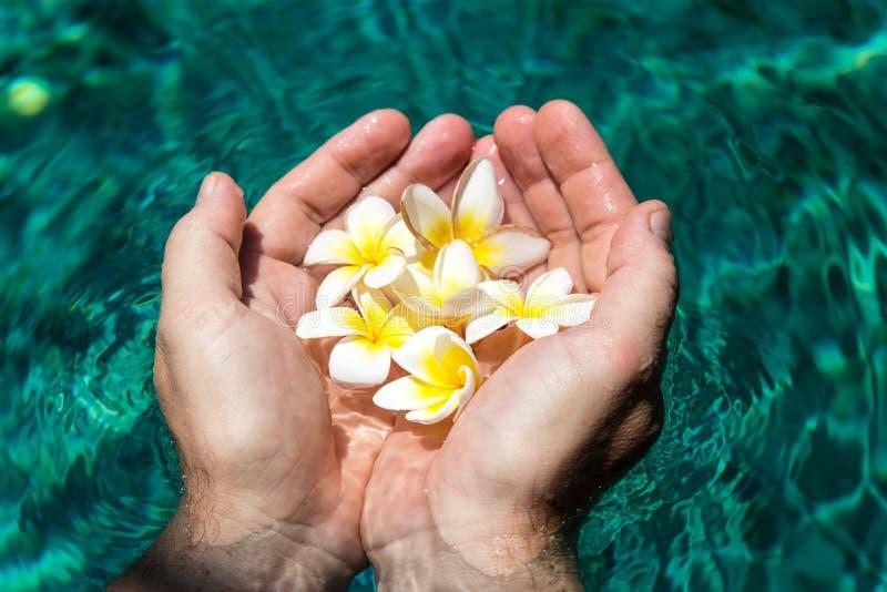Fleurs dans des mains dans la piscine image libre de droits