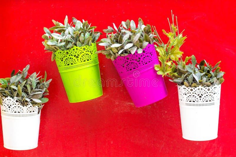 Fleurs dans des pots de fleurs sur fond rouge photos libres de droits