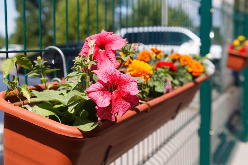 Fleurs dans la conception des baquets accrochant des lits de fleur près du café image stock