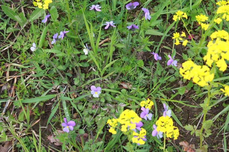fleurs dans la cour de ville photographie stock libre de droits