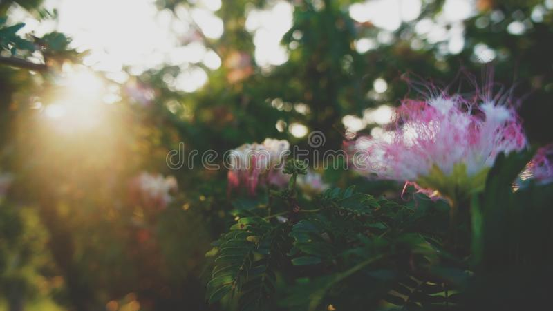 Fleurs dans la ferme photos stock