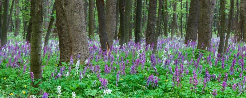 Fleurs dans la forêt images stock