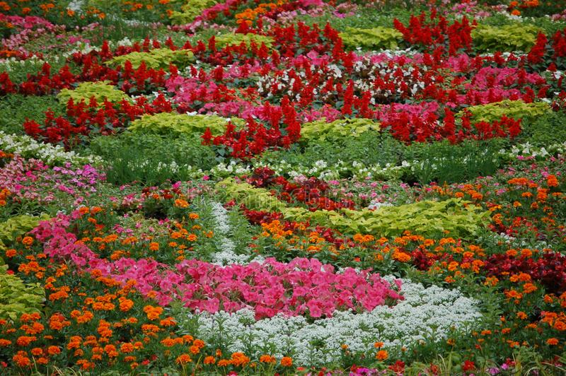 Fleurs dans la place pionnière de tribunal, Portland, Orégon image stock