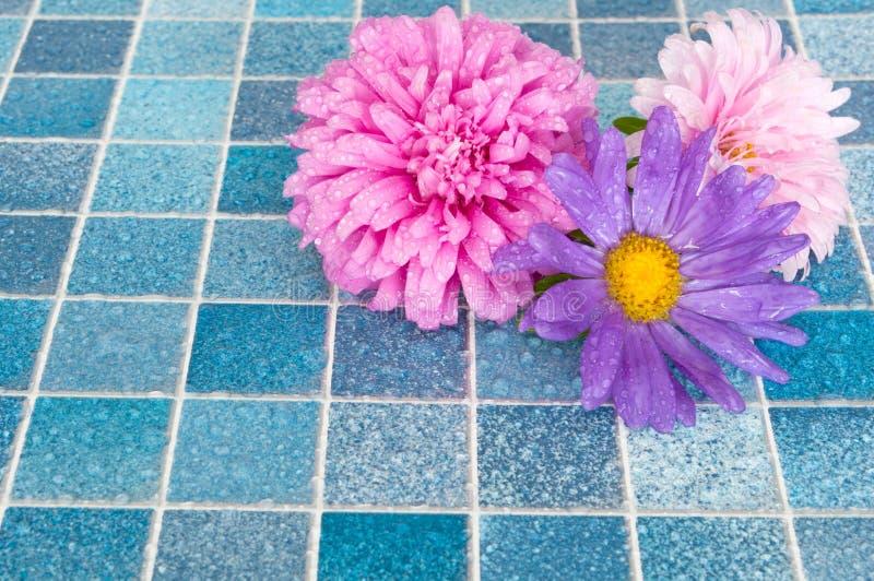 Fleurs dans la salle de bains image stock