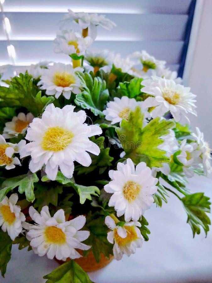Fleurs dans le bureau image stock