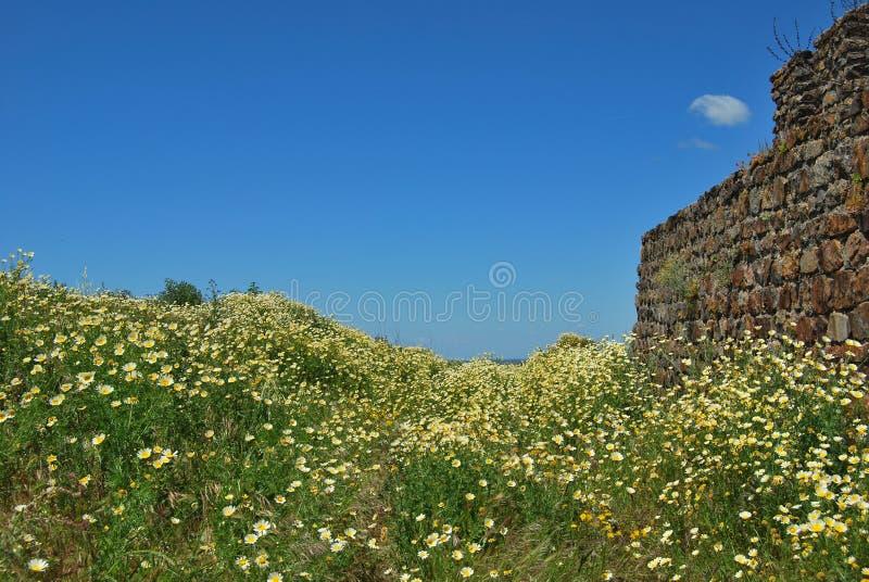 Fleurs dans le château, Montemor o Novo, Portugal image libre de droits