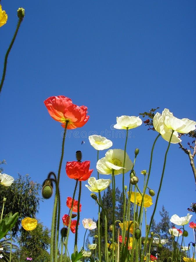Fleurs dans le ciel images stock