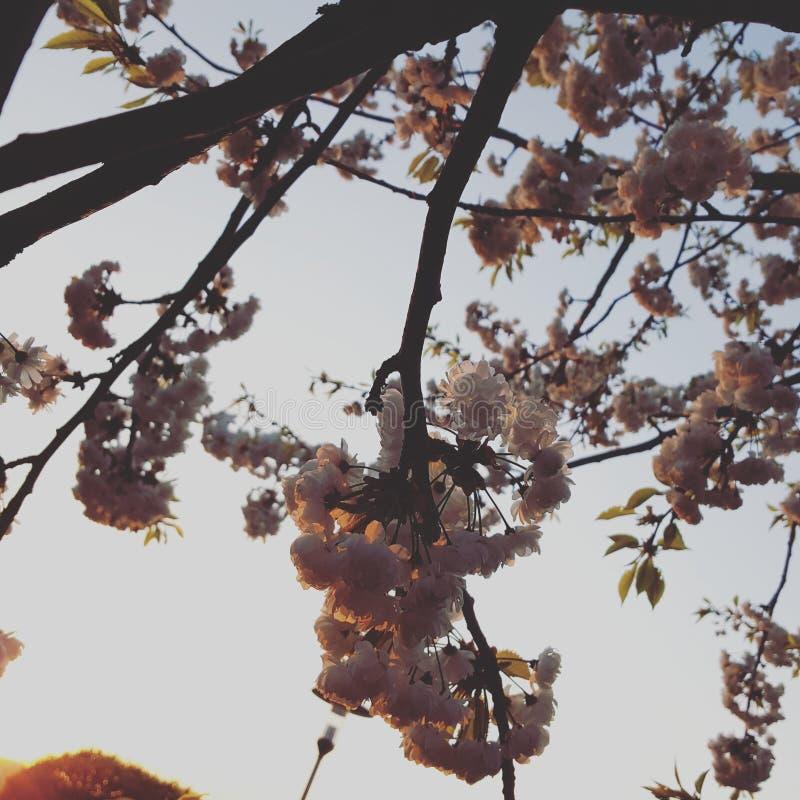 Fleurs dans le coucher du soleil photographie stock
