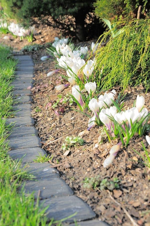 Fleurs dans le jardin photographie stock