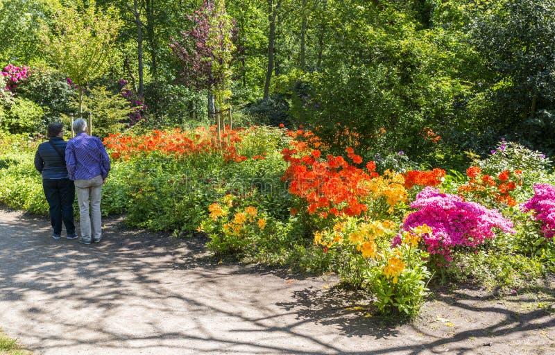 Fleurs dans le jardin anglais en Hollande images libres de droits
