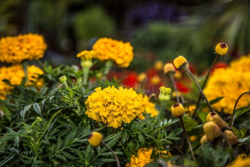 Fleurs dans le jardin botanique photo stock