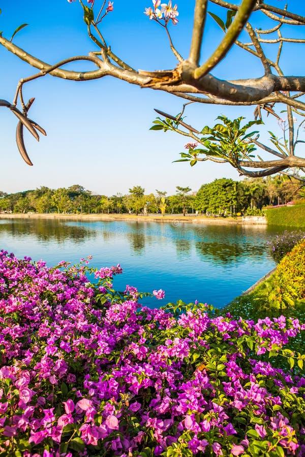 Fleurs dans le jardin et le lac sur le ciel bleu photos stock
