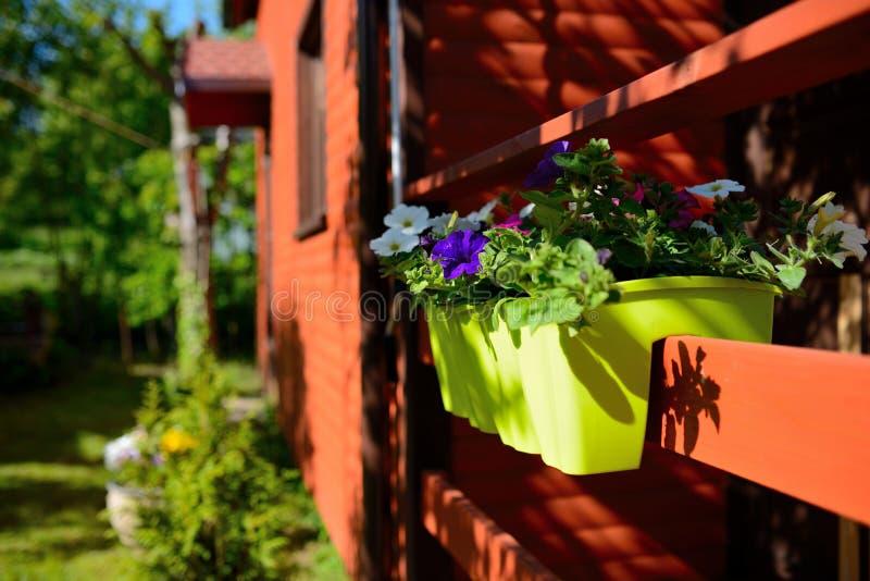 Fleurs dans le jardin, pot photos stock