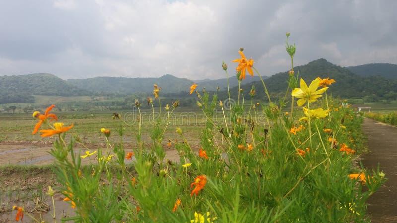 Fleurs dans le jogja de kayang de barrage photographie stock libre de droits