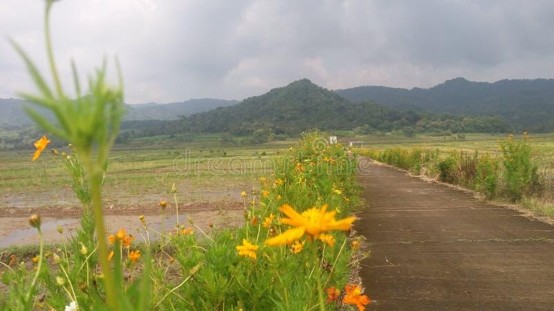 Fleurs dans le jogja de kayang de barrage photo libre de droits