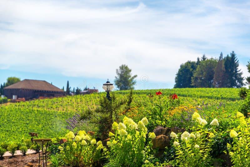 Fleurs dans le pays de vin de l'Orégon images libres de droits