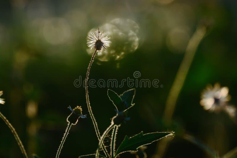 Fleurs dans le pré contre le coucher du soleil comme fond photos stock