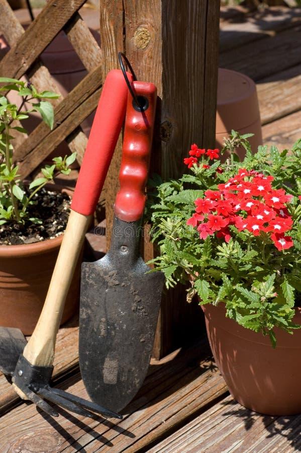 Fleurs dans le printemps photo stock