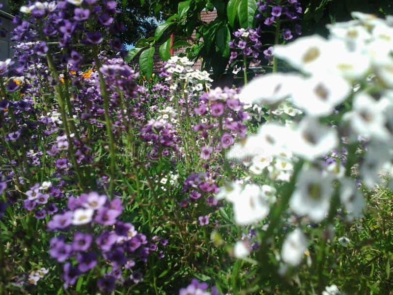Fleurs dans le vent photographie stock