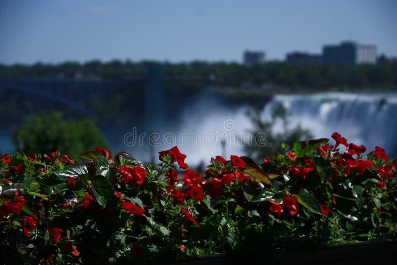 Fleurs dans les chutes du Niagara image libre de droits