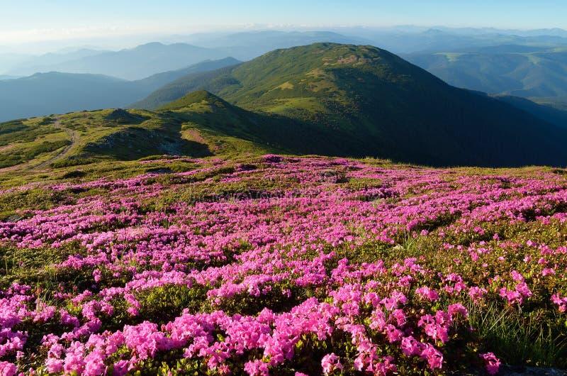 Fleurs dans les montagnes images stock