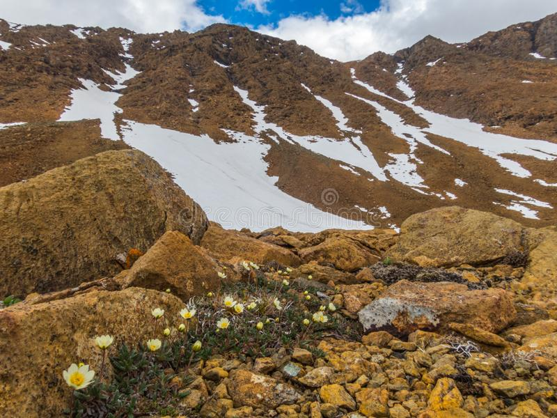 Fleurs dans les montagnes Bel horizontal de montagne, panorama photo stock
