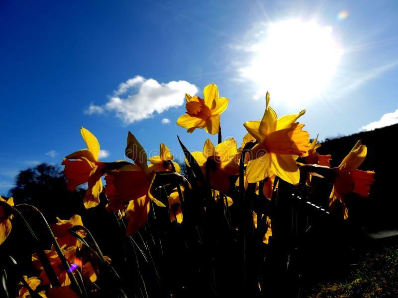 Fleurs dans les rayons du soleil photo stock