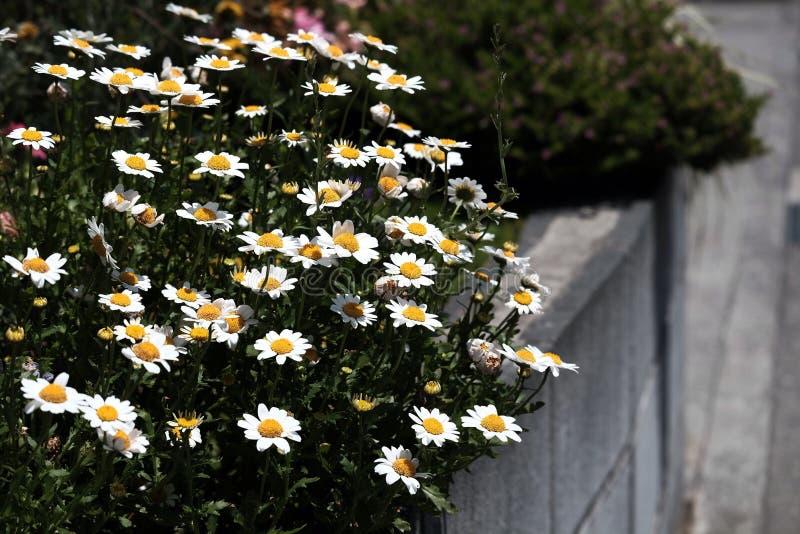 Fleurs dans les rues de ville photographie stock libre de droits