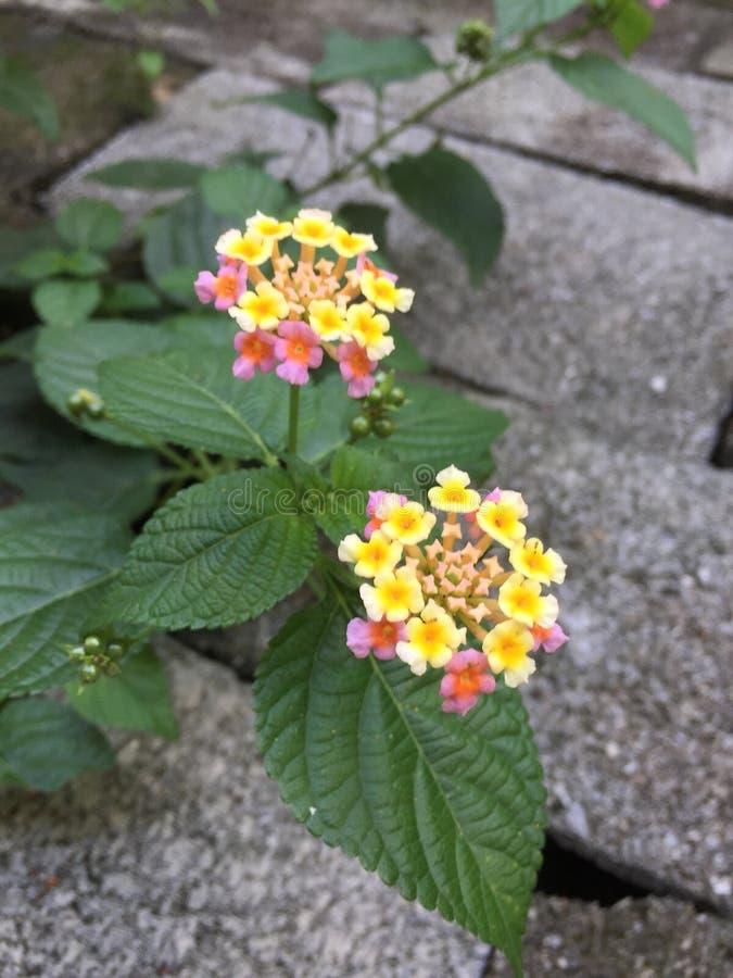 Fleurs dans mon arrière-cour photo libre de droits