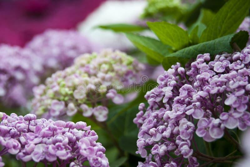 Fleurs dans Serre Royales images stock