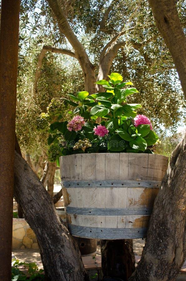 Fleurs dans un baril de vin images libres de droits