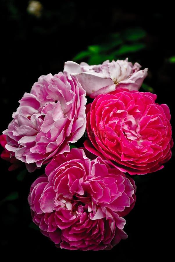 Fleurs dans un jardin image stock image du couleur fleur for Fleurs dans un jardin