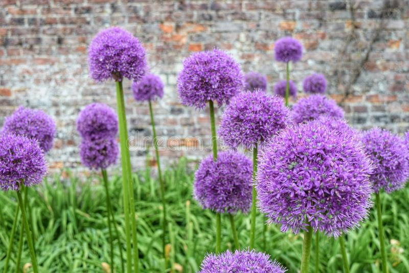 Fleurs dans un jardin de pays photographie stock libre de droits