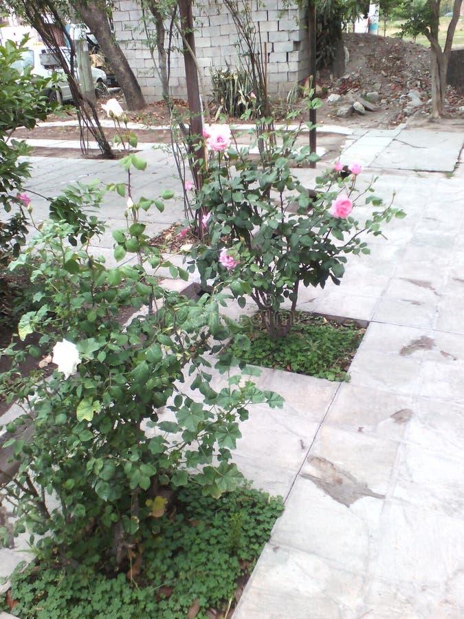 Fleurs dans un petit jardin photo libre de droits