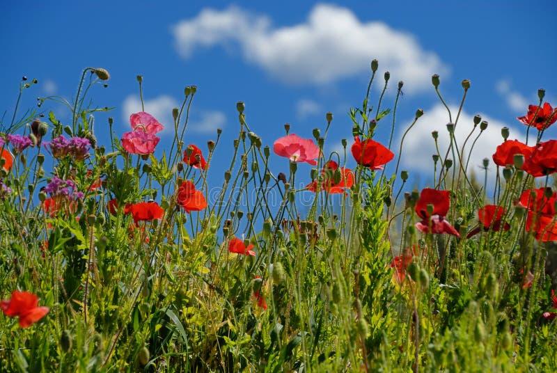 Fleurs dans un pré images libres de droits