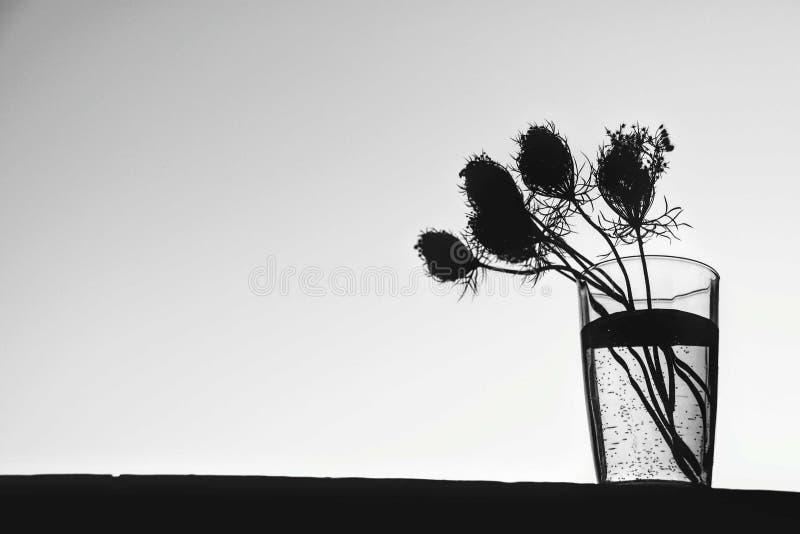 Fleurs dans un vase en noir et blanc photo stock