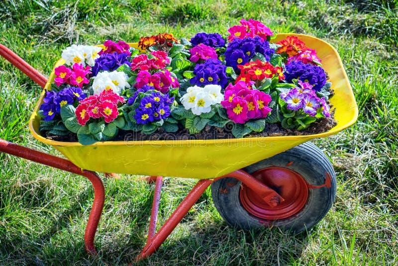 Fleurs dans un vieux chariot photos stock