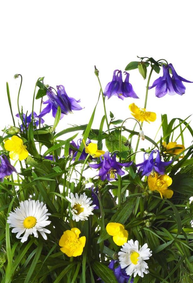 Fleurs dans une herbe photographie stock