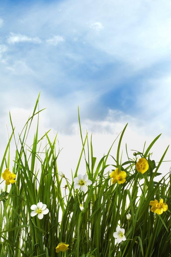 Fleurs dans une herbe verte images stock