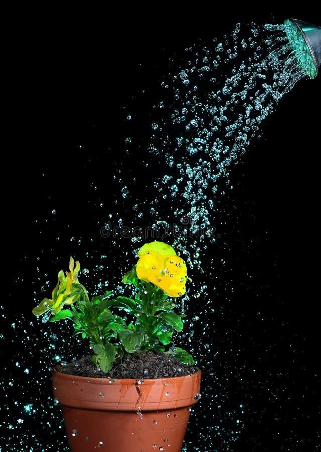 Fleurs de arrosage photos stock