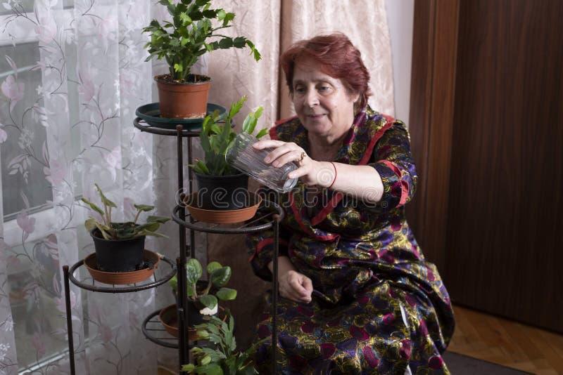 Fleurs de arrosage de dame âgée dans une maison images libres de droits