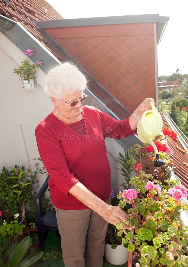 Fleurs de arrosage de dame âgée images stock