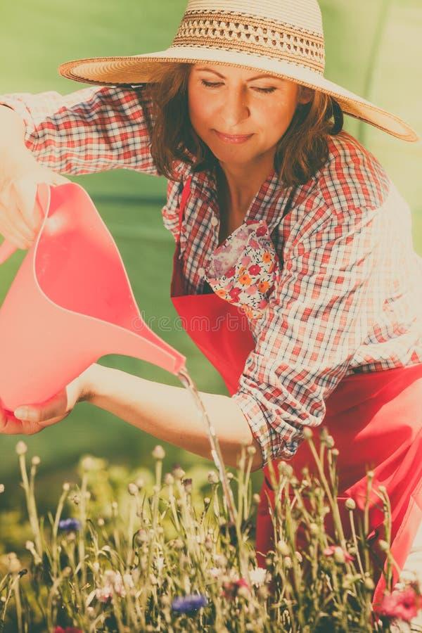 Download Fleurs De Arrosage De Femme Dans Le Jardin Image stock - Image du jardinage, rouge: 87705049
