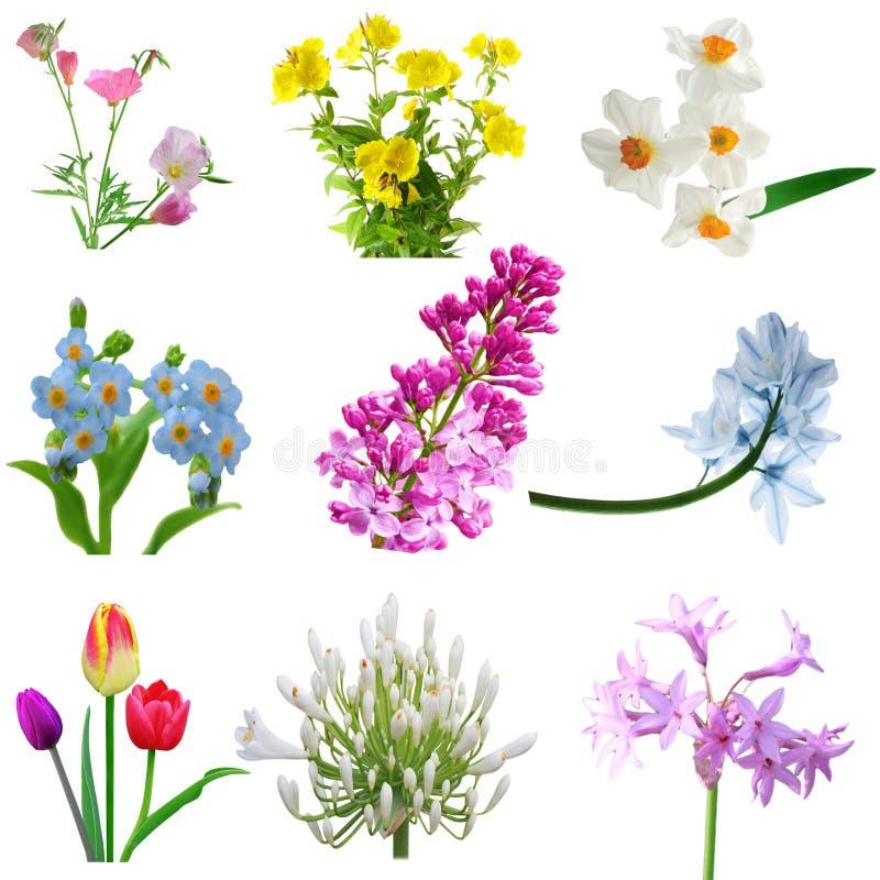 Fleurs de batterie image stock