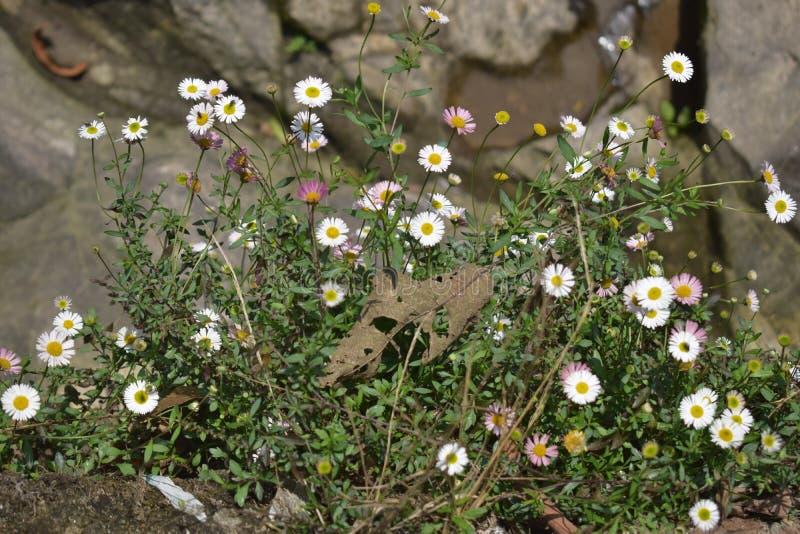 Fleurs de beauté photo stock