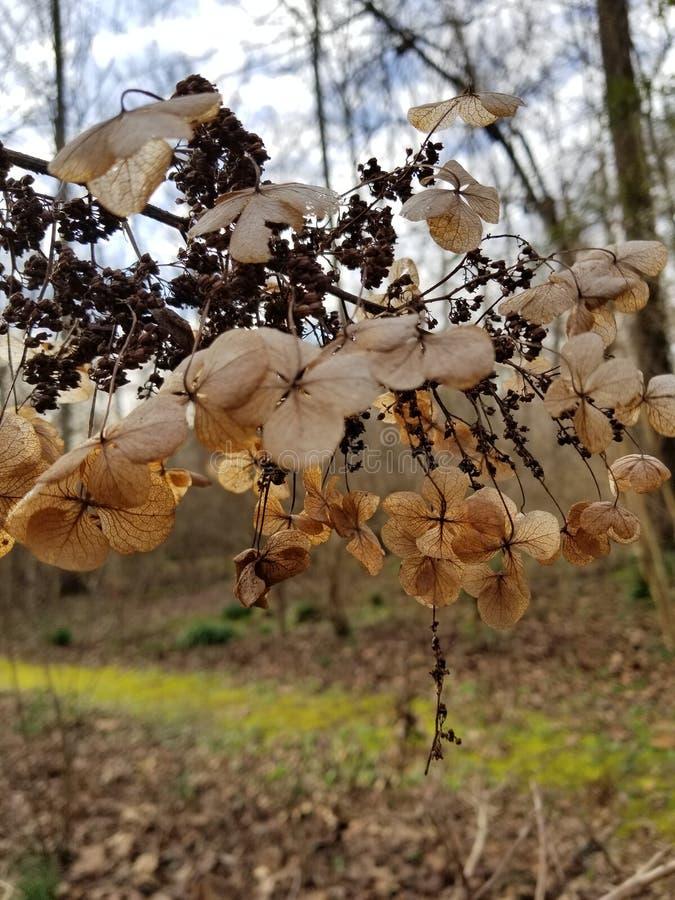 Fleurs de Brown défraîchies par hiver photographie stock libre de droits