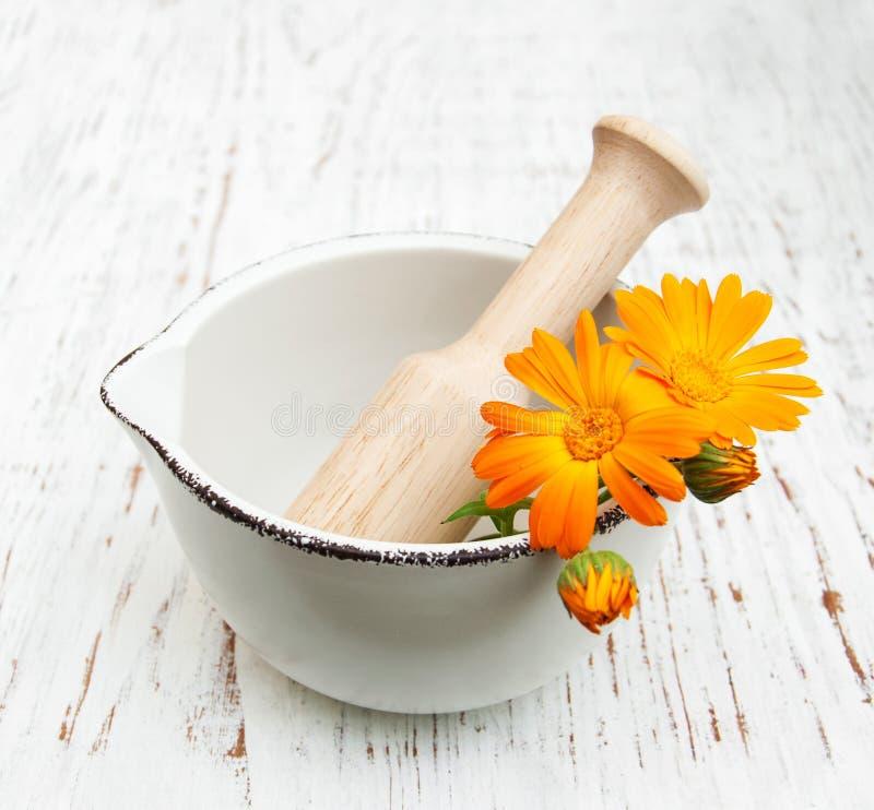 Fleurs de Calendula photos libres de droits