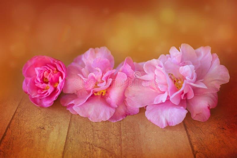 Fleurs de camélia de rose de jour de mères saluant le fond photographie stock